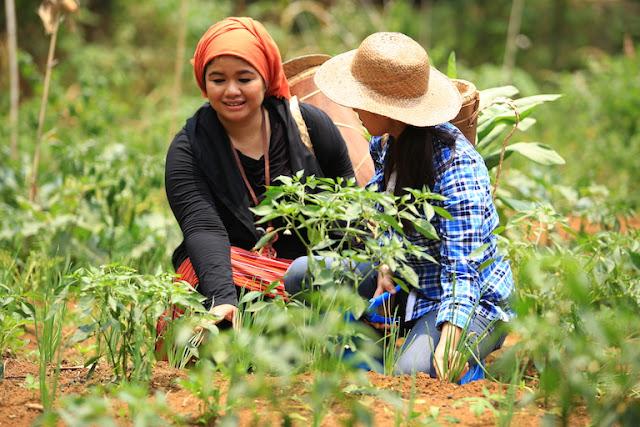 Pekarangan Ekologis: Solusi Strategis dan Kekinian Dalam Mendorong Kebangkitan Petani Muda