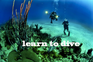 learn to dive and go on a diving trip in the deep sea