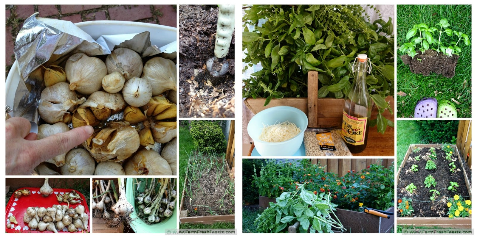 All About Garlic | Farm Fresh Feasts