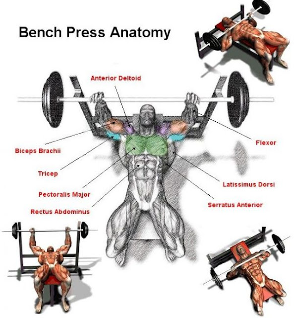 To Add 20 Kilograms In 3 Months Try This Bench Press Program