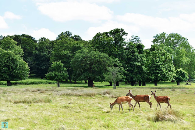 Richmond Park, Londres