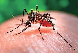 anakku sakit chikungunya di saat pandemi virus corona nurul sufitri travel lifestyle blogger review kesehatan halodoc rumah sakit siaga
