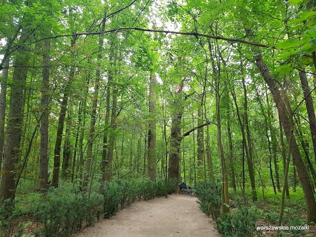 Warszawa Warsaw Bielany teren zielony Lasy Młocińskie dąb drzewo las park