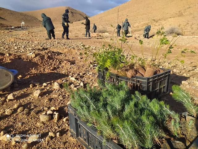 محافظة الغابات لقصر الشلالة : تبرمج حملة تشجير 100 هكتار