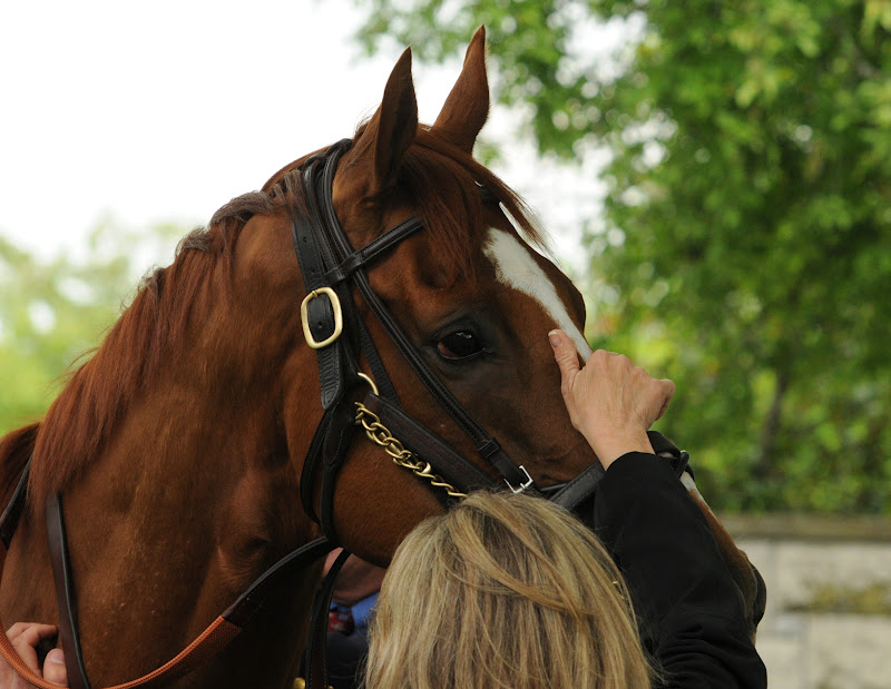 Thoroughbred training 2 minute lick definition
