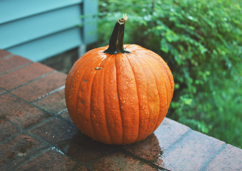 The Flying Clubhouse: Autumn Throwback | pumpkin in rain