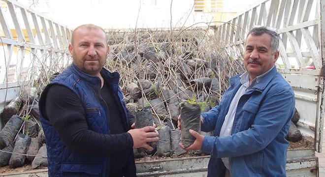 Diyarbakır Çınar'da çiftçilere fıstık fidesi dağıtıldı