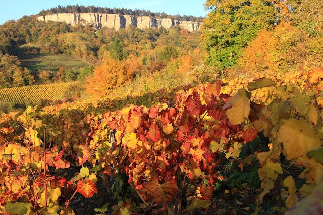 Vigne de Cormot, Bourgogne, (C) Greg Clouzeau