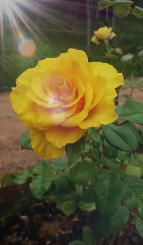 Bunga Hati