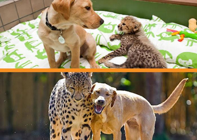 16 Adorable Photos Of Animals Growing Up Together – Then And Now