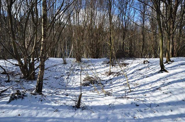 Grodzisko stożkowe we wsi Głęboczek w Puszczy Zielonce