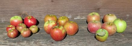 Six varieties of apples, 17 in all, arranged in three groups on a rustic wooden step