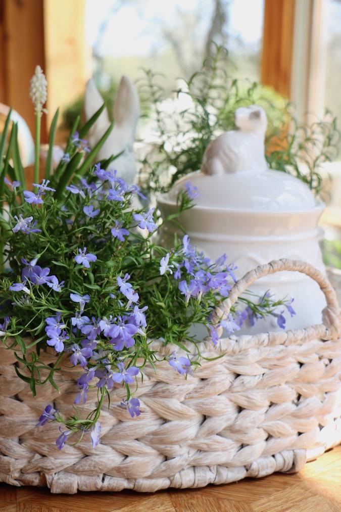 Sky blue lobelia in a Spring Blue and White Basket Arrangement