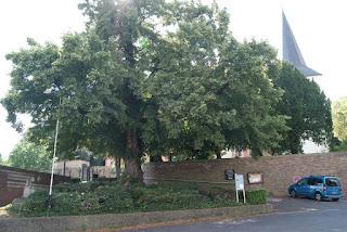 Ein großer Baum steht vor einer Kirche auf einem betonierten Platz