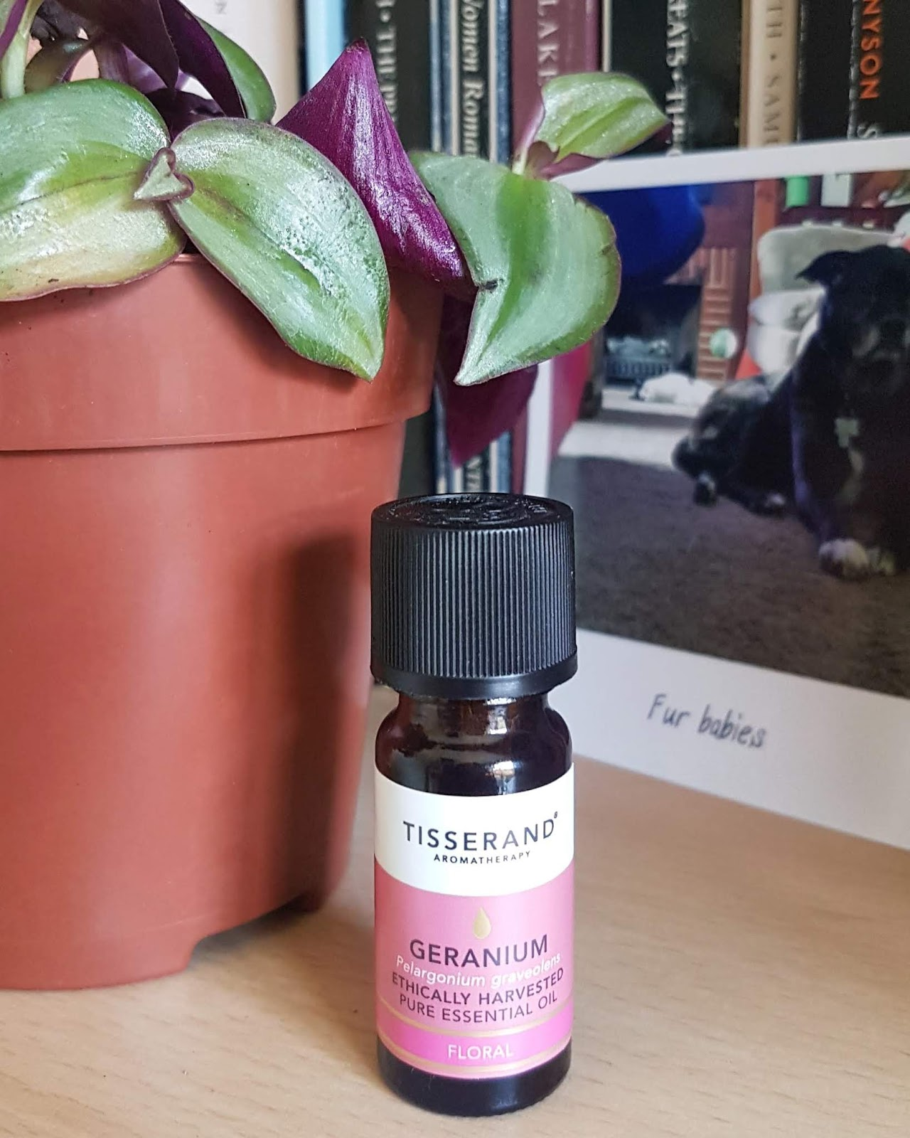 Tisserand Geranium Essential Oil Review