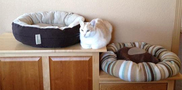 10+ Hilarious Examples Of Cat Logic