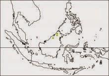 golden naped barbet Psilopogon pulcherrimus