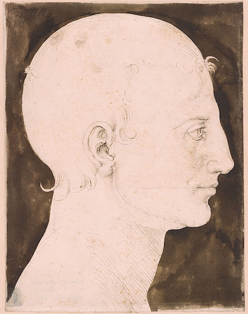 Constructed Head of a Man in Profile (c. 1512-1513)  Albrecht Dürer (German, 1471-1528)  Pen, brown ink and dark brown wash on paper  9 9/16 x 7 7/16 in.  The Morgan Library and Museum