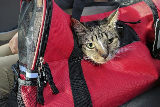 Como levar seu animal de estimação para Orlando