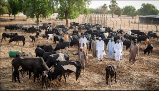 7 Things you should know about RUGA settlement