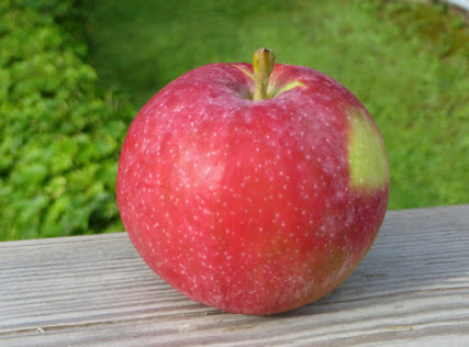 Round red apple with prominent white lenticel spots.