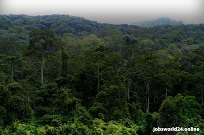 تم الكشف عن درجة الحرارة الحرجة لعمر الأشجار الاستوائية