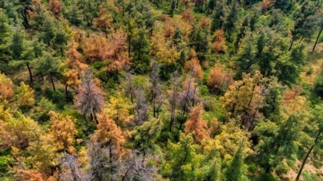 142 είδη δέντρων έχουν εξαφανιστεί από τη φύση - 442 βρίσκονται στο χείλος της εξαφάνισης