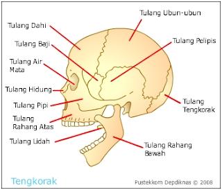 http://www.sigerpendidikan.com/2016/10/macam-macam-bagian-penyusun-tulang.html