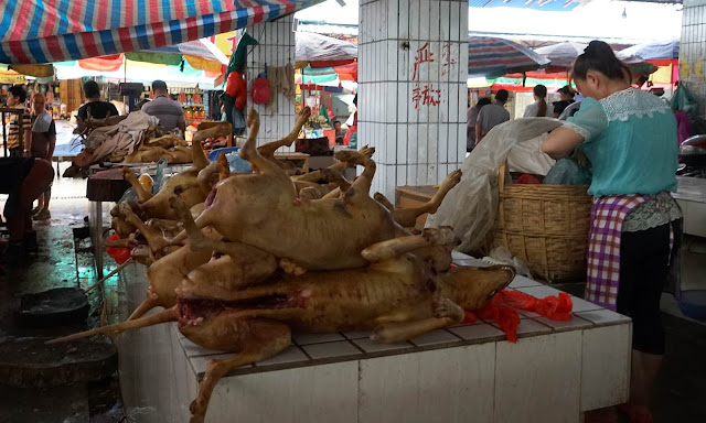صينيون سيأكلون 10 آلاف كلب .. مدينة تتحدى كورونا وتقيم مهرجاناً سيستمر 10 أيام