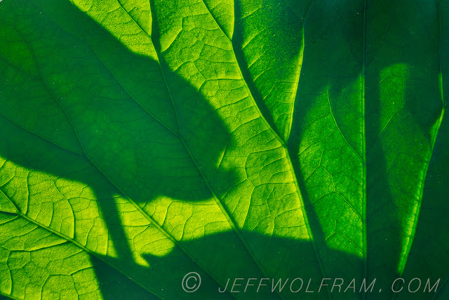 Garden Photography by Jeff Wolfram