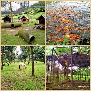 ragam fauna di budayaland