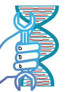 Types of gene mutation