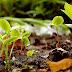 Brindarán taller de permacultura en la Oficina de la Juventud