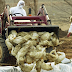 China Downplays First Human Case Of H10N3 Bird Flu, 'Risk Of Large-Scale Spread Is Low'