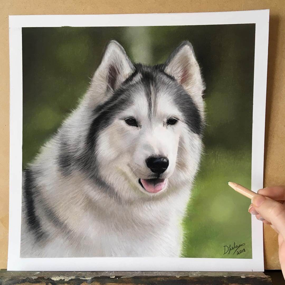 07-Chippewa-Danielle-Fisher-Realistic-Animal-Portrait-Pastel-Drawings-www-designstack-co