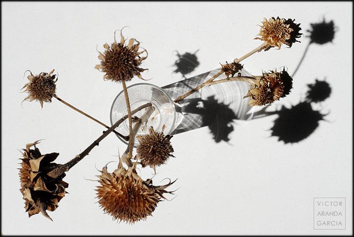 Fotografía de varios girasoles secos con un vaso de tubo sobre una mesa blanca