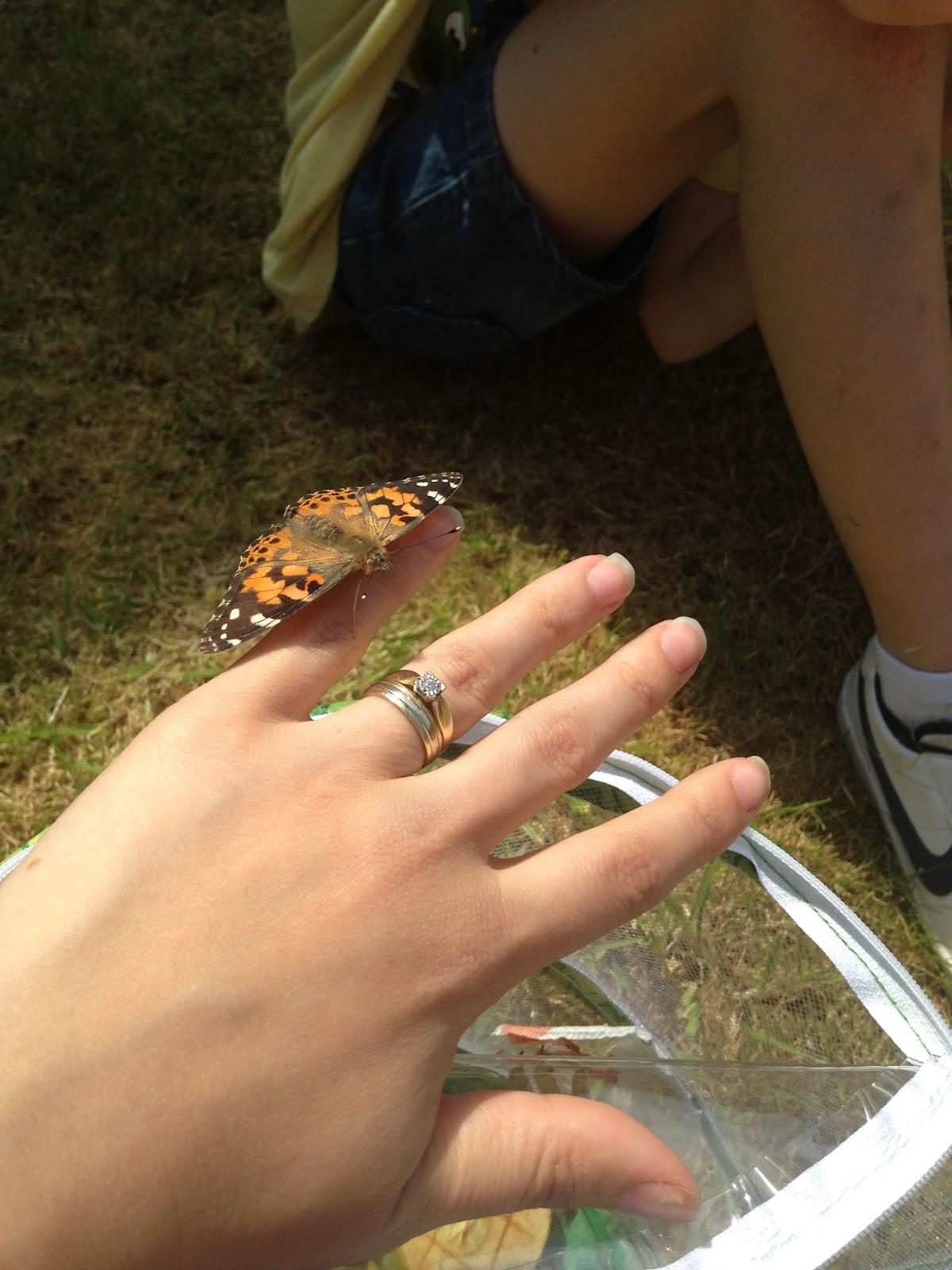 Live Butterfly Garden | Serena Christina