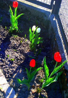 Wiosna w ogrodzie