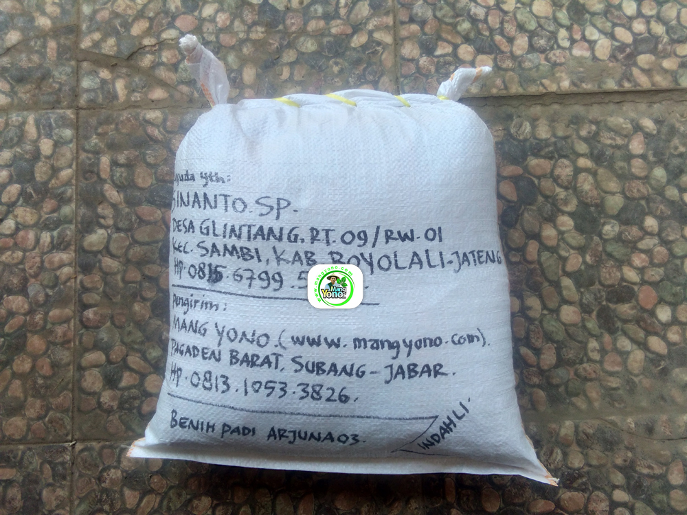 Benih Padi yang dibeli   SINANTO SP Boyolali, Jateng.   (Setelah packing karung).