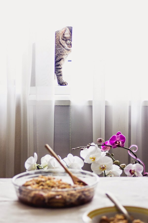 Brown rice pudding with roasted plums thisisasweetblog recipe cat