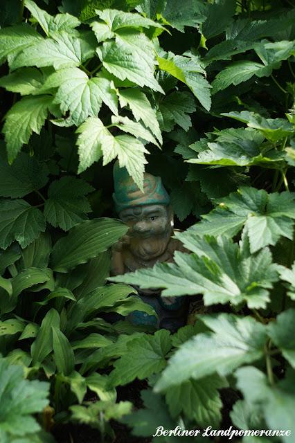 Versteckter Gartenzwerg