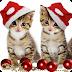 Δύο γλυκές γατούλες...