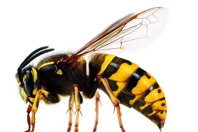 Belajar dari seekor lebah, Inspirasi hidup