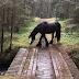 ΒΙΝΤΕΟ: Πώς θα περάσω την γέφυρα;