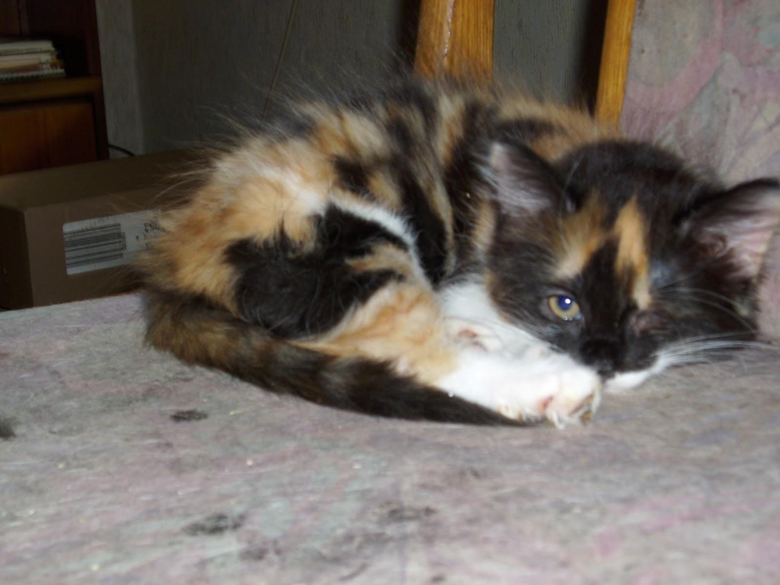 Geliebte Unsere Haustiere: Tränendes Auge bei Katze #MU_08