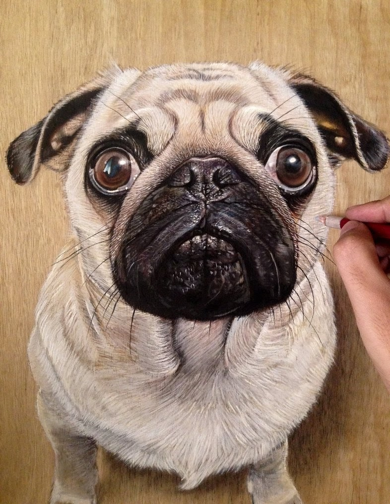 15-Ashley-The-Pug-Ivan-Hoo-Animals-Translated-to-Realistic-Drawings-www-designstack-co