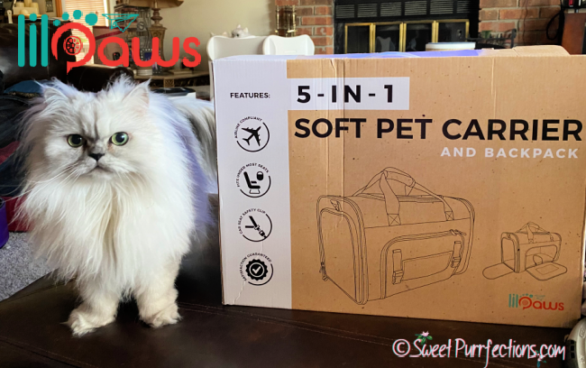 silver shaded Persian Cat, Truffle, beside Lil Paws cat carrier