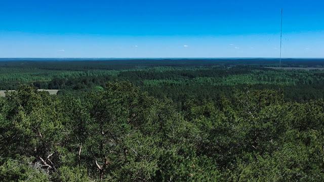 Szwedzka Góra - najwyższe wzniesienie Puszczy Bydgoskiej