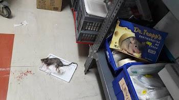 a6691120c8d1 Παρέλαση... ποντικών στο νοσοκομείο Κιλκίς καταγγέλλει η ΠΟΕΔΗΝ  (photos+video)