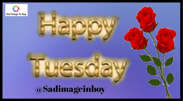 Happy Tuesday images   good morning tuesday, happy tuesday morning quotes, tuesday morning quotes funny